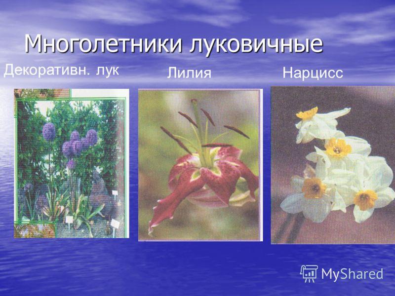 Многолетники луковичные Декоративн. лук ЛилияНарцисс