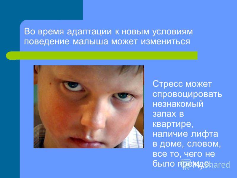 Во время адаптации к новым условиям поведение малыша может измениться Стресс может спровоцировать незнакомый запах в квартире, наличие лифта в доме, словом, все то, чего не было прежде.