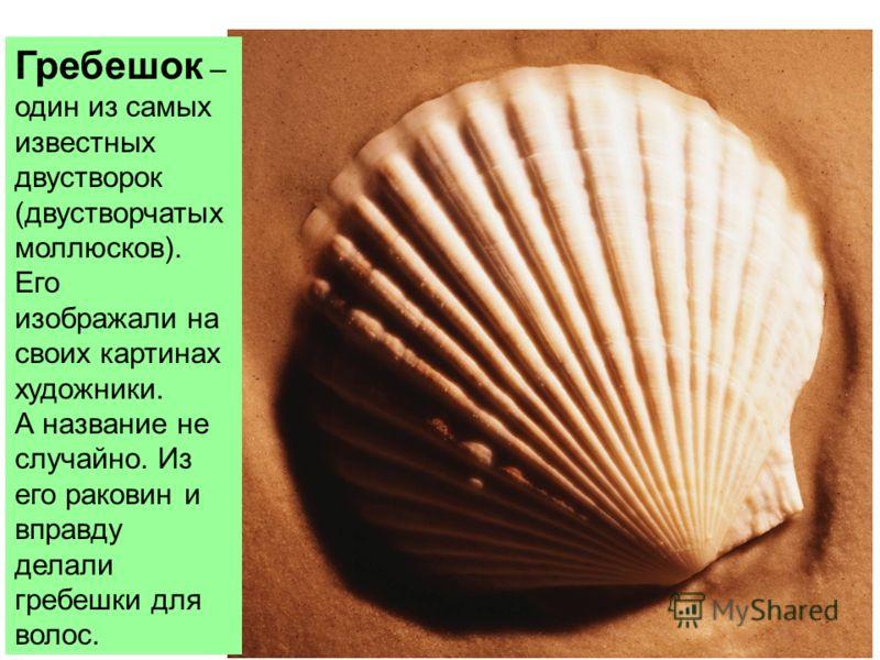 Гребешок – один из самых известных двустворок (двустворчатых моллюсков). Его изображали на своих картинах художники. А название не случайно. Из его раковин и вправду делали гребешки для волос.