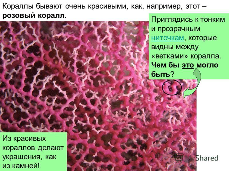 Кораллы бывают очень красивыми, как, например, этот – розовый коралл. Приглядись к тонким и прозрачным ниточкам, которые видны между «ветками» коралла. ниточкам Чем бы это могло быть? Из красивых кораллов делают украшения, как из камней!