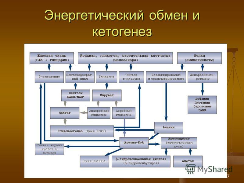 17 Энергетический обмен и кетогенез