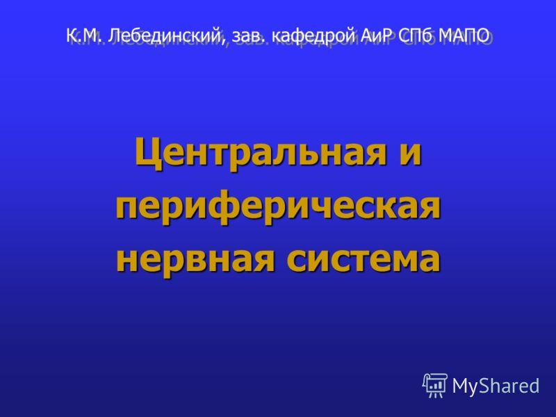 Центральная и периферическая нервная система К.М. Лебединский, зав. кафедрой АиР СПб МАПО