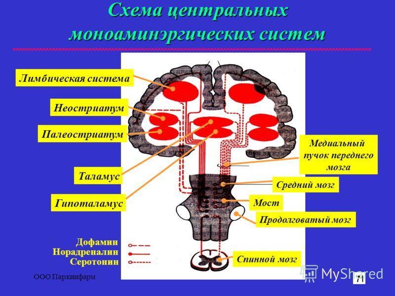 ООО Паркинфарм2 Схема центральных моноаминэргических систем Лимбическая система Таламус Медиальный пучок переднего мозга Продолговатый мозг Спинной мозг Средний мозг Мост Дофамин Норадреналин Серотонин Палеостриатум Неостриатум Гипоталамус