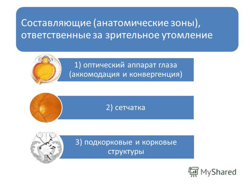Составляющие (анатомические зоны), ответственные за зрительное утомление 1) оптический аппарат глаза (аккомодация и конвергенция) 2) сетчатка 3) подкорковые и корковые структуры