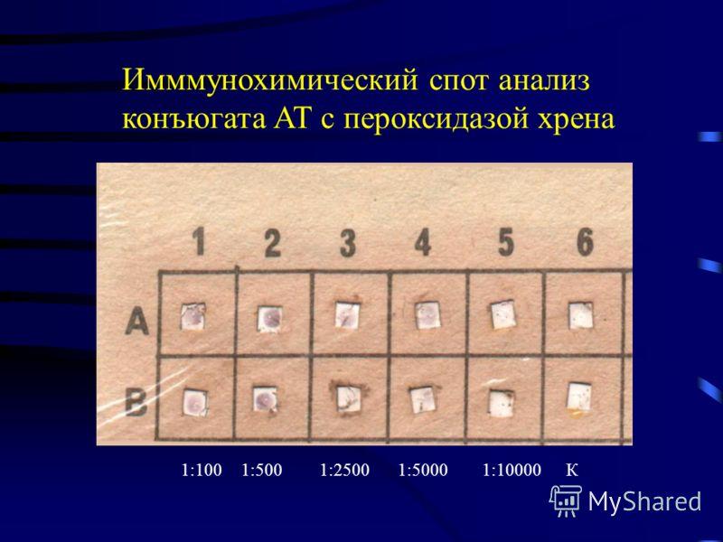 Имммунохимический спот анализ конъюгата АТ с пероксидазой хрена 1:1001:5001:25001:50001:10000К
