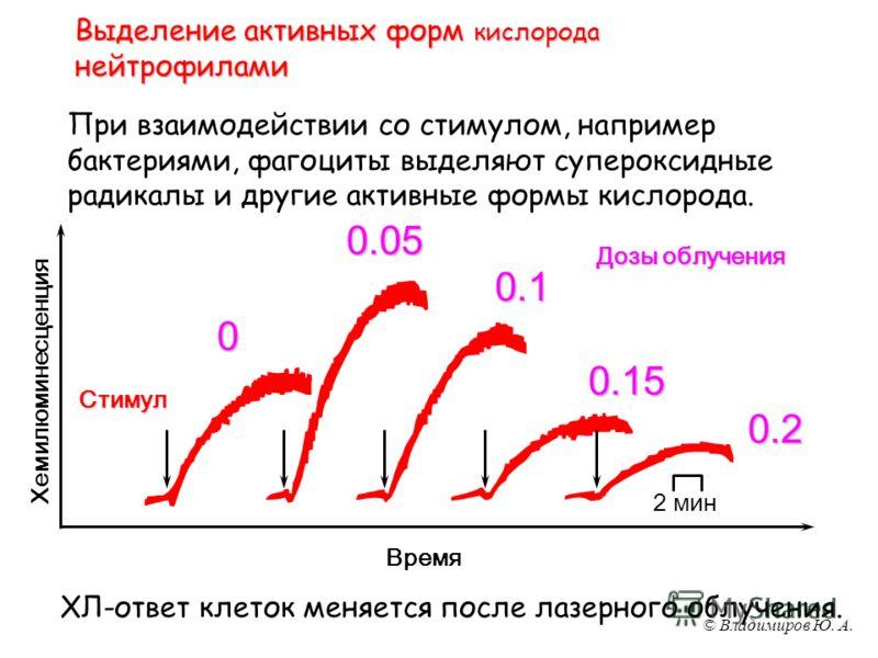 © Владимиров Ю. А. Выделение активных форм кислорода нейтрофилами При взаимодействии со стимулом, например бактериями, фагоциты выделяют супероксидные радикалы и другие активные формы кислорода. Время Хемилюминесценция 2 минСтимул ХЛ-ответ клеток мен