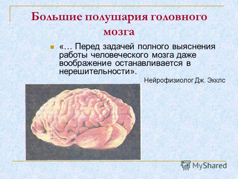 Большие полушария головного мозга «… Перед задачей полного выяснения работы человеческого мозга даже воображение останавливается в нерешительности». Нейрофизиолог Дж. Экклс