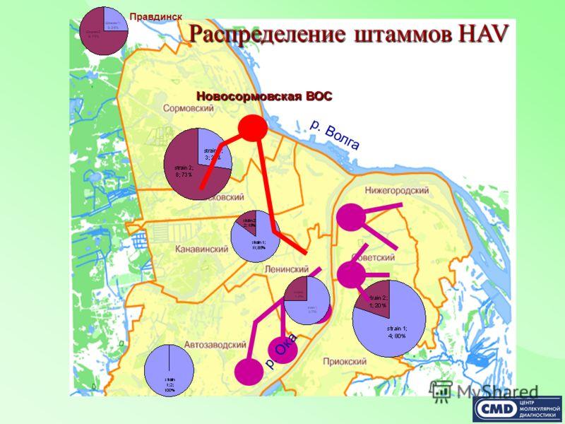 Распределение штаммов HAV р. Волга р. Ока Новосормовская ВОС