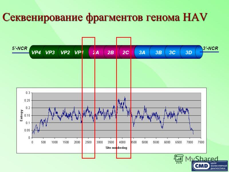 Секвенирование фрагментов генома HAV VP4 VP3 VP2 VP1 2A 2B 2C 3A 3B 3C 3D 5-NCR3-NCR
