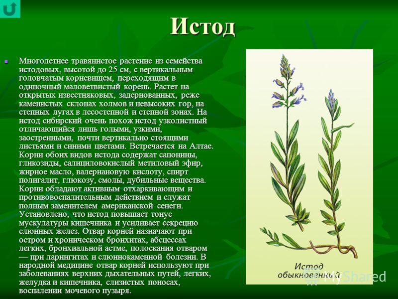 Истод Многолетнее травянистое растение из семейства истодовых, высотой до 25 см, с вертикальным головчатым корневищем, переходящим в одиночный маловетвистый корень. Растет на открытых известняковых, задернованных, реже каменистых склонах холмов и нев