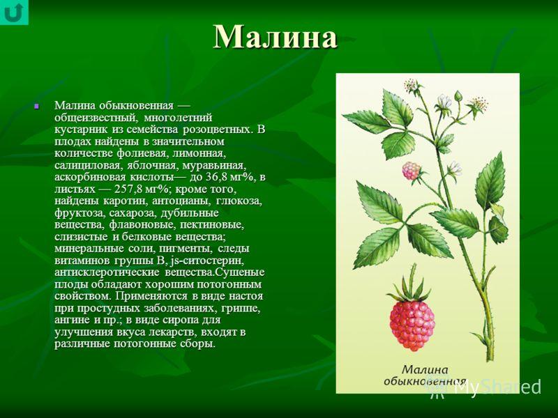Малина Малина обыкновенная общеизвестный, многолетний кустарник из семейства розоцветных. В плодах найдены в значительном количестве фолиевая, лимонная, салициловая, яблочная, муравьиная, аскорбиновая кислоты до 36,8 мг%, в листьях 257,8 мг%; кроме т