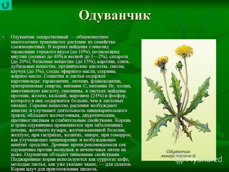 Одуванчик Одуванчик лекарственный общеизвестное многолетнее травянистое растение из семейства сложноцветных. В корнях найдены гликозид тараксацин горького вкуса (до 10%), полисахарид инулин (осенью до 40% и весной до 12%), сахароза (до 20%), белковые