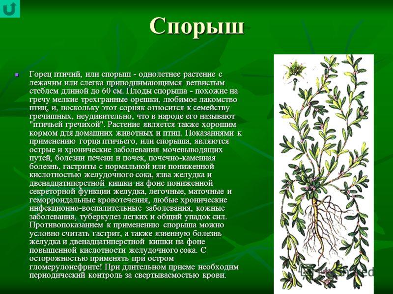 Спорыш Горец птичий, или спорыш - однолетнее растение с лежачим или слегка приподнимающимся ветвистым стеблем длиной до 60 см. Плоды спорыша - похожие на гречу мелкие трехгранные орешки, любимое лакомство птиц, и, поскольку этот сорняк относится к се