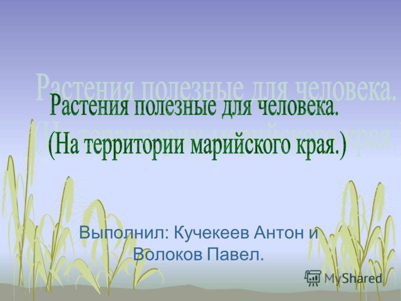 Выполнил: Кучекеев Антон и Волоков Павел.