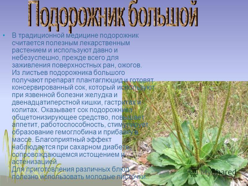 В традиционной медицине подорожник считается полезным лекарственным растением и используют давно и небезуспешно, прежде всего для заживления поверхностных ран, ожогов. Из листьев подорожника большого получают препарат плантаглюцид и готовят консервир