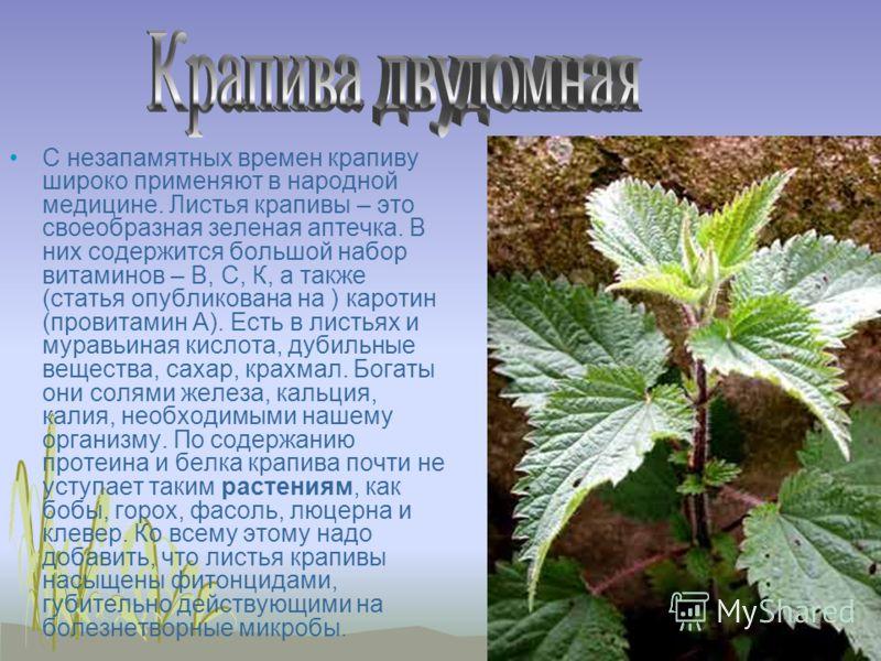 С незапамятных времен крапиву широко применяют в народной медицине. Листья крапивы – это своеобразная зеленая аптечка. В них содержится большой набор витаминов – В, С, К, а также (статья опубликована на ) каротин (провитамин А). Есть в листьях и мура