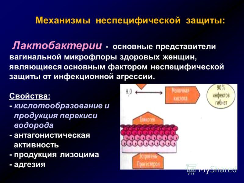 Механизмы неспецифической защиты: Лактобактерии - основные представители вагинальной микрофлоры здоровых женщин, являющиеся основным фактором неспециф