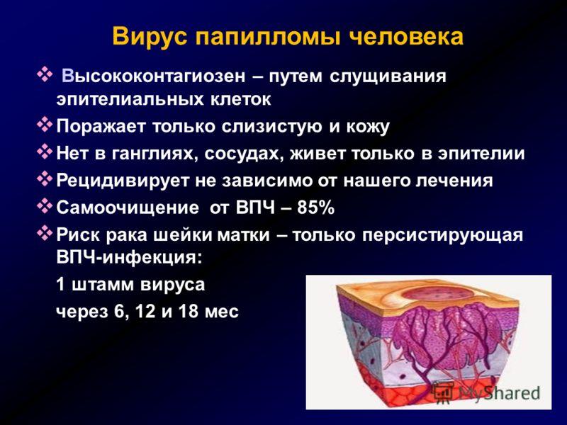 Вирус папилломы человека Высококонтагиозен – путем слущивания эпителиальных клеток Поражает только слизистую и кожу Нет в ганглиях, сосудах, живет только в эпителии Рецидивирует не зависимо от нашего лечения Самоочищение от ВПЧ – 85% Риск рака шейки
