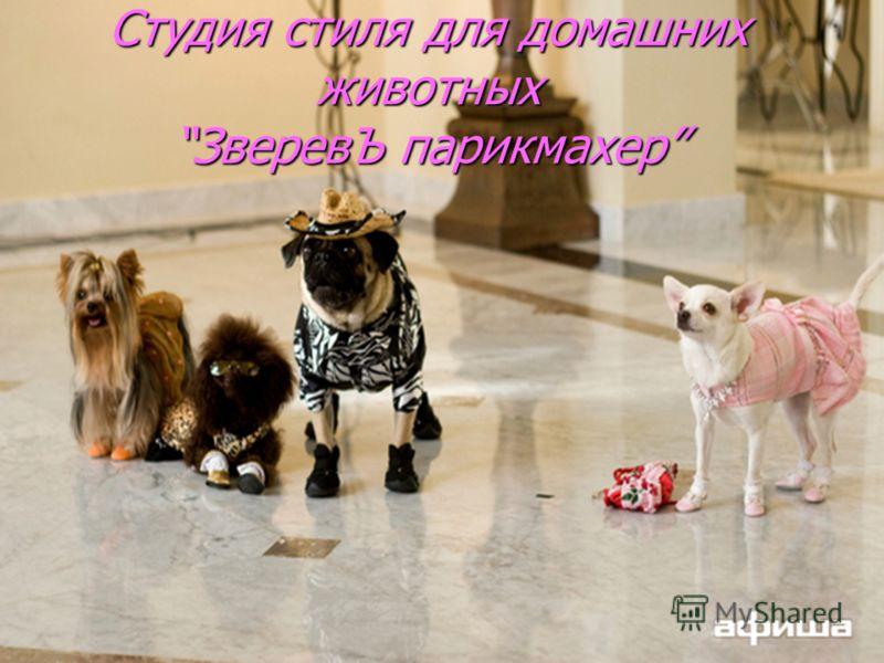 Студия стиля для домашних животныхЗверевЪ парикмахер