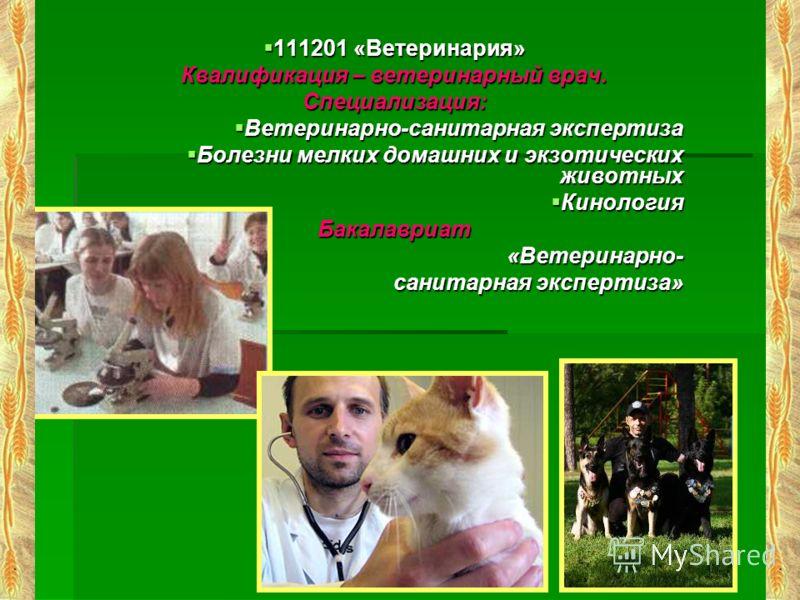 111201 «Ветеринария» 111201 «Ветеринария» Квалификация – ветеринарный врач. Специализация: Ветеринарно-санитарная экспертиза Ветеринарно-санитарная экспертиза Болезни мелких домашних и экзотических животных Болезни мелких домашних и экзотических живо