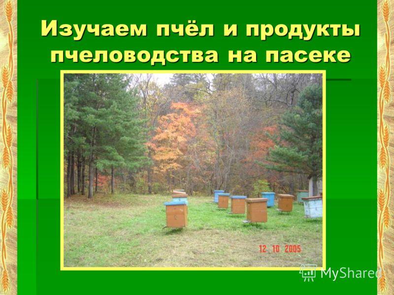 Изучаем пчёл и продукты пчеловодства на пасеке