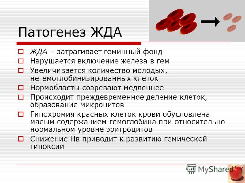 Патогенез ЖДА ЖДА – затрагивает геминный фонд Нарушается включение железа в гем Увеличивается количество молодых, негемоглобинизированных клеток Нормобласты созревают медленнее Происходит преждевременное деление клеток, образование микроцитов Гипохро