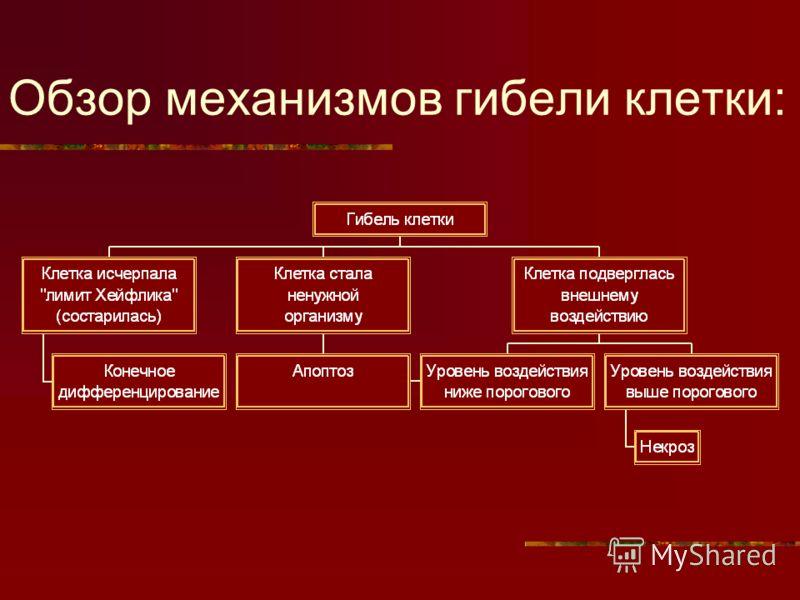 Обзор механизмов гибели клетки: