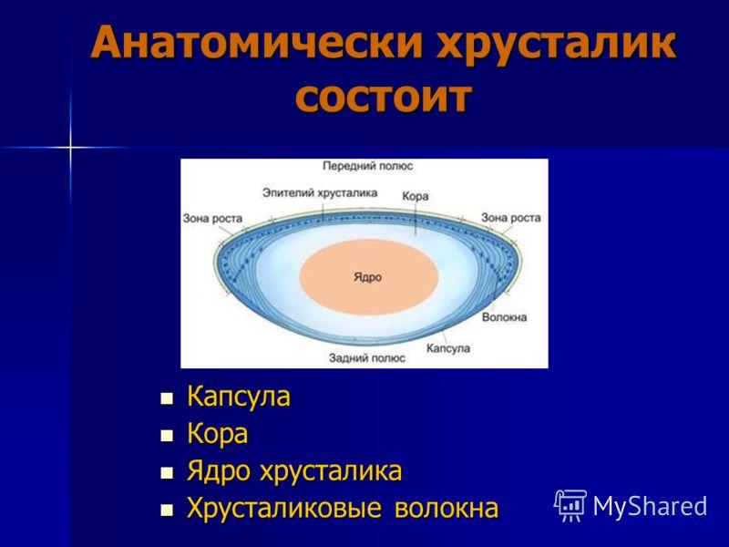 Анатомически хрусталик состоит Капсула Капсула Кора Кора Ядро хрусталика Ядро хрусталика Хрусталиковые волокна Хрусталиковые волокна