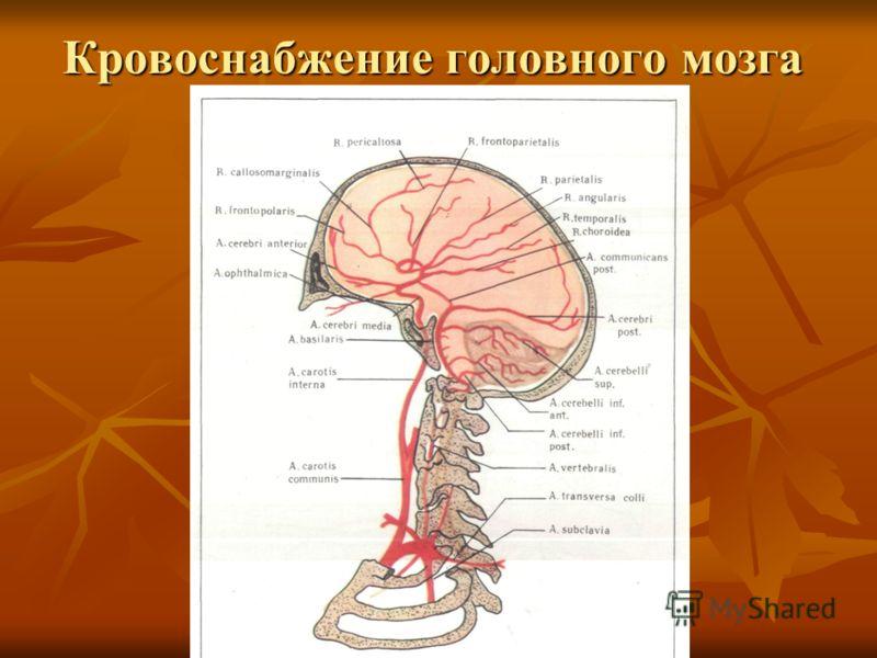 "головного мозга.""."