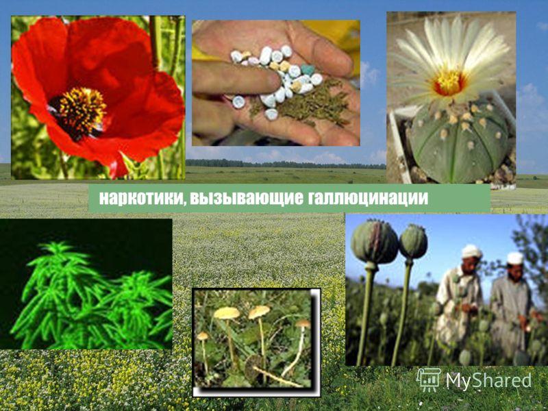 наркотики, вызывающие галлюцинации