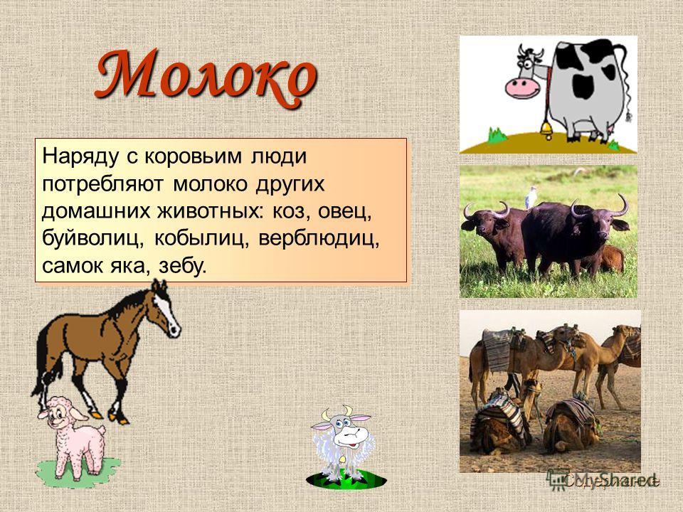 Наряду с коровьим люди потребляют молоко других домашних животных: коз, овец, буйволиц, кобылиц, верблюдиц, самок яка, зебу. Молоко Молоко Содержание