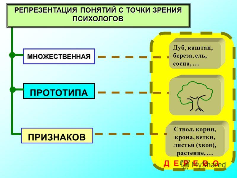 МНОЖЕСТВЕННАЯ ПРИЗНАКОВ РЕПРЕЗЕНТАЦИЯ ПОНЯТИЙ С ТОЧКИ ЗРЕНИЯ ПСИХОЛОГОВ Д Е Р Е В О ПРОТОТИПА Дуб, каштан, береза, ель, сосна, … Ствол, корни, крона, ветки, листья (хвоя), растение, …