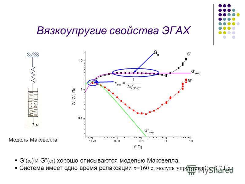 Вязкоупругие свойства ЭГАХ G( ω ) и G( ω ) хорошо описываются моделью Максвелла. Система имеет одно время релаксации τ=160 с, модуль упругости G 0 =3,7 Па. Модель Максвелла
