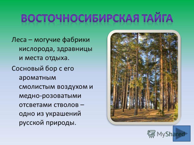 Леса – могучие фабрики кислорода, здравницы и места отдыха. Сосновый бор с его ароматным смолистым воздухом и медно-розоватыми отсветами стволов – одно из украшений русской природы.
