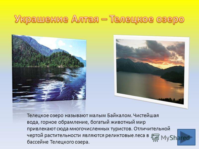 Телецкое озеро называют малым Байкалом. Чистейшая вода, горное обрамление, богатый животный мир привлекают сюда многочисленных туристов. Отличительной чертой растительности являются реликтовые леса в бассейне Телецкого озера.