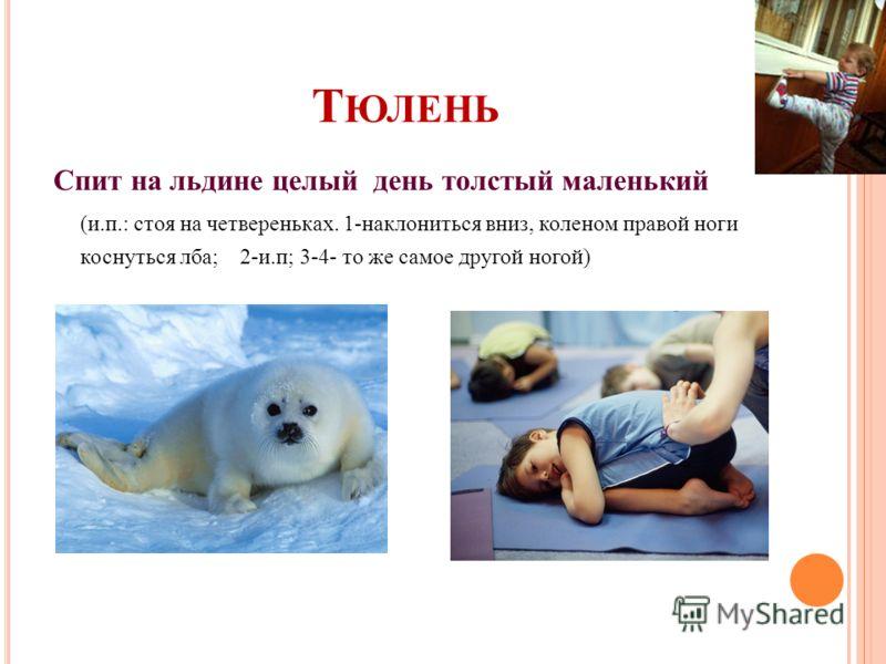 Т ЮЛЕНЬ Спит на льдине целый день толстый маленький (и.п.: стоя на четвереньках. 1-наклониться вниз, коленом правой ноги коснуться лба; 2-и.п; 3-4- то же самое другой ногой)