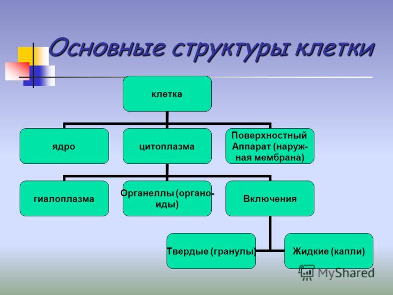 Основные структуры клетки клетка ядроцитоплазма гиалоплазма Органеллы (органо- иды) Включения Твердые (гранулы) Жидкие (капли) Поверхностный Аппарат (наруж- ная мембрана)
