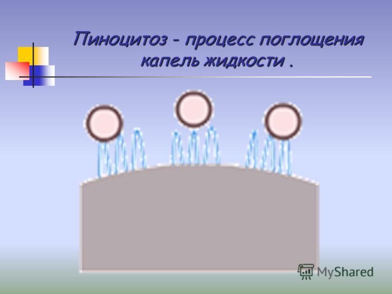 Пиноцитоз - процесс поглощения капель жидкости.