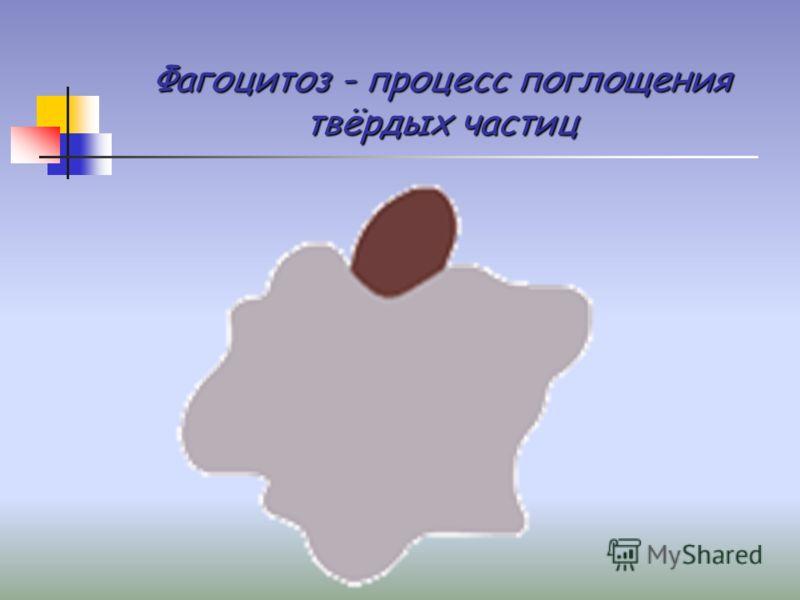 Фагоцитоз - процесс поглощения твёрдых частиц