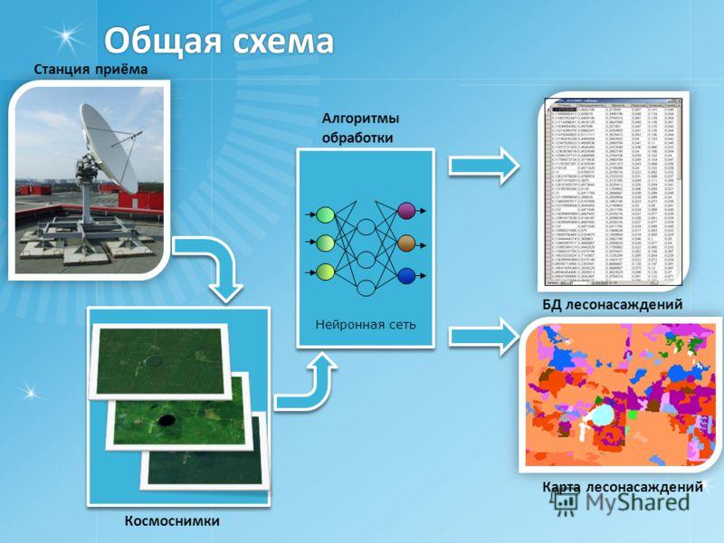 Общая схема Нейронная сеть Карта лесонасаждений Космоснимки Алгоритмы обработки Станция приёма БД лесонасаждений