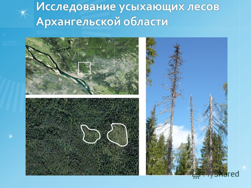 Исследование усыхающих лесов Архангельской области