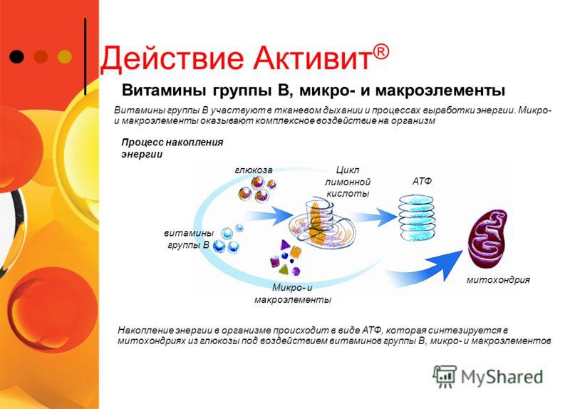 витамины группы В Действие Активит ® Процесс накопления энергии Витамины группы В участвуют в тканевом дыхании и процессах выработки энергии. Микро- и макроэлементы оказывают комплексное воздействие на организм Витамины группы В, микро- и макроэлемен