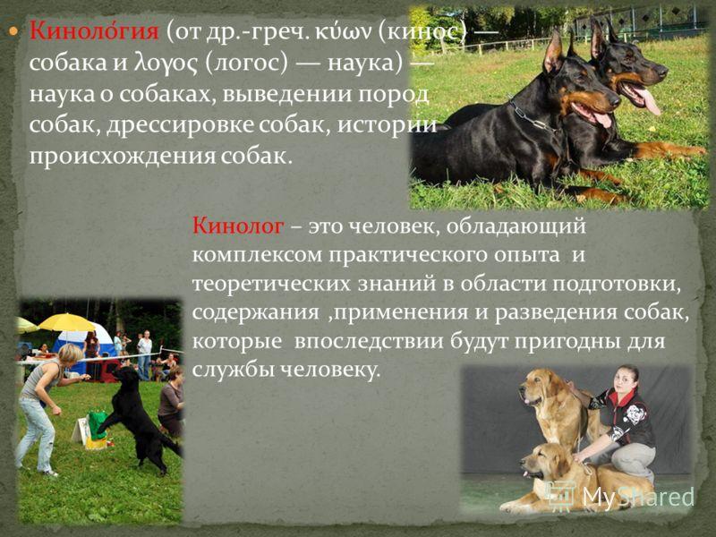 Киноло́гия (от др.-греч. κύων (кинос) собака и λογος (логос) наука) наука о собаках, выведении пород собак, дрессировке собак, истории происхождения собак. Кинолог – это человек, обладающий комплексом практического опыта и теоретических знаний в обла