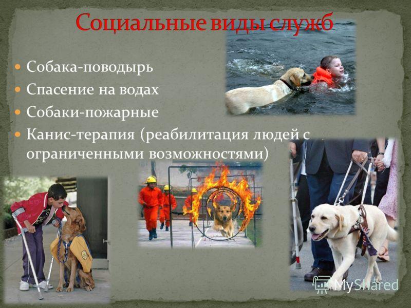 Собака-поводырь Спасение на водах Собаки-пожарные Канис-терапия (реабилитация людей с ограниченными возможностями)