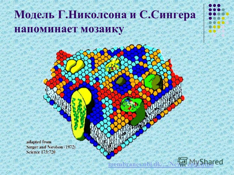 Модель Г.Николсона и С.Сингера напоминает мозаику membranes.nbi.dk/.../News_engl.html