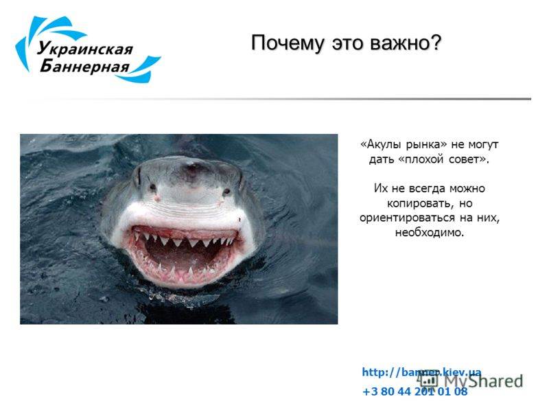 Почему это важно? «Акулы рынка» не могут дать «плохой совет». Их не всегда можно копировать, но ориентироваться на них, необходимо. http://banner.kiev.ua +3 80 44 201 01 08