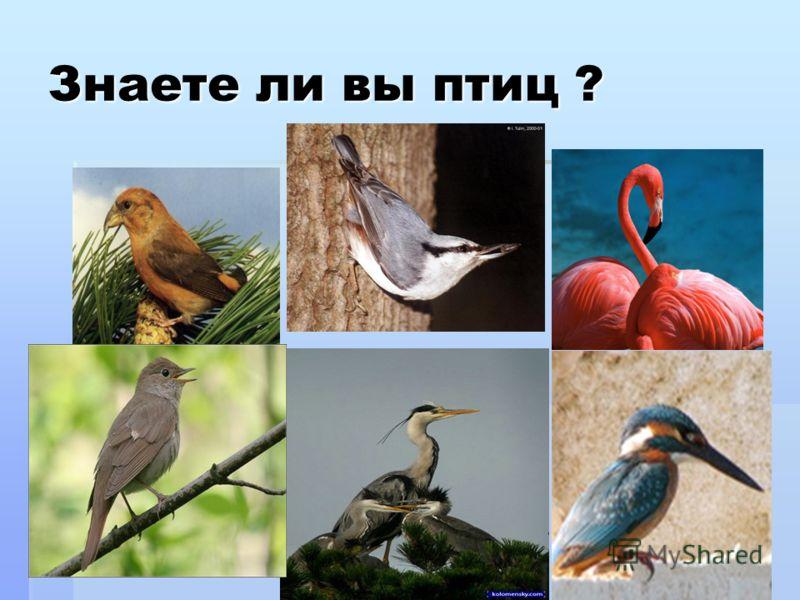 Знаете ли вы птиц ?