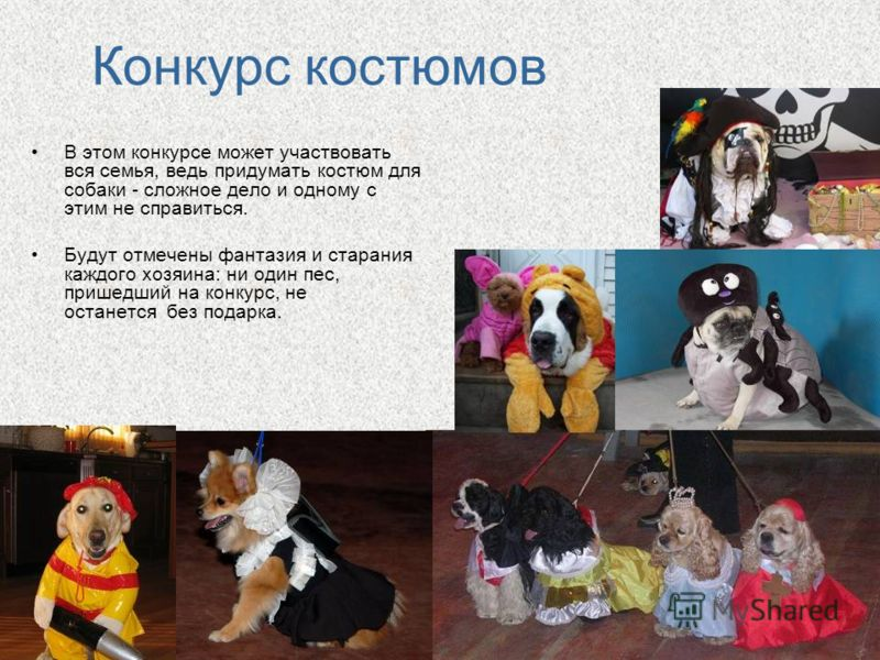 Конкурс костюмов В этом конкурсе может участвовать вся семья, ведь придумать костюм для собаки - сложное дело и одному с этим не справиться. Будут отмечены фантазия и старания каждого хозяина: ни один пес, пришедший на конкурс, не останется без подар