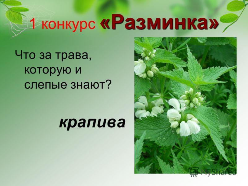 «Разминка» 1 конкурс «Разминка» Что за трава, которую и слепые знают? крапива
