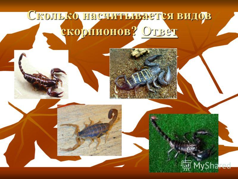 Размеры паукообразных составляют от 0,1 мм до 17 см.
